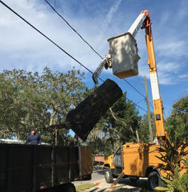 Hazard Tree Removal Lakeland