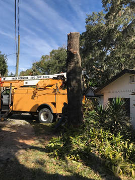 Tree Removal Lakeland FL