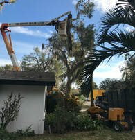 Lakeland Florida Tree Service